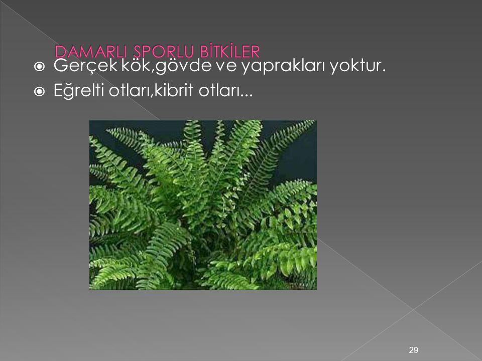 Damarsız Bitkiler  İletim demetleri yoktur. Madde taşınması difüzyon ve ozmosla olur.