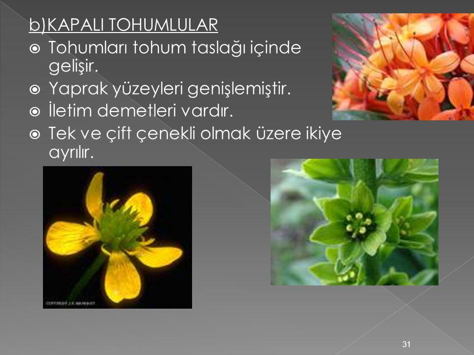 a)AÇIK TOHUMLULAR  Tohum kozalak içinde oluşur. Her zaman yeşil ve iğne yapraklı bitkilerdir.