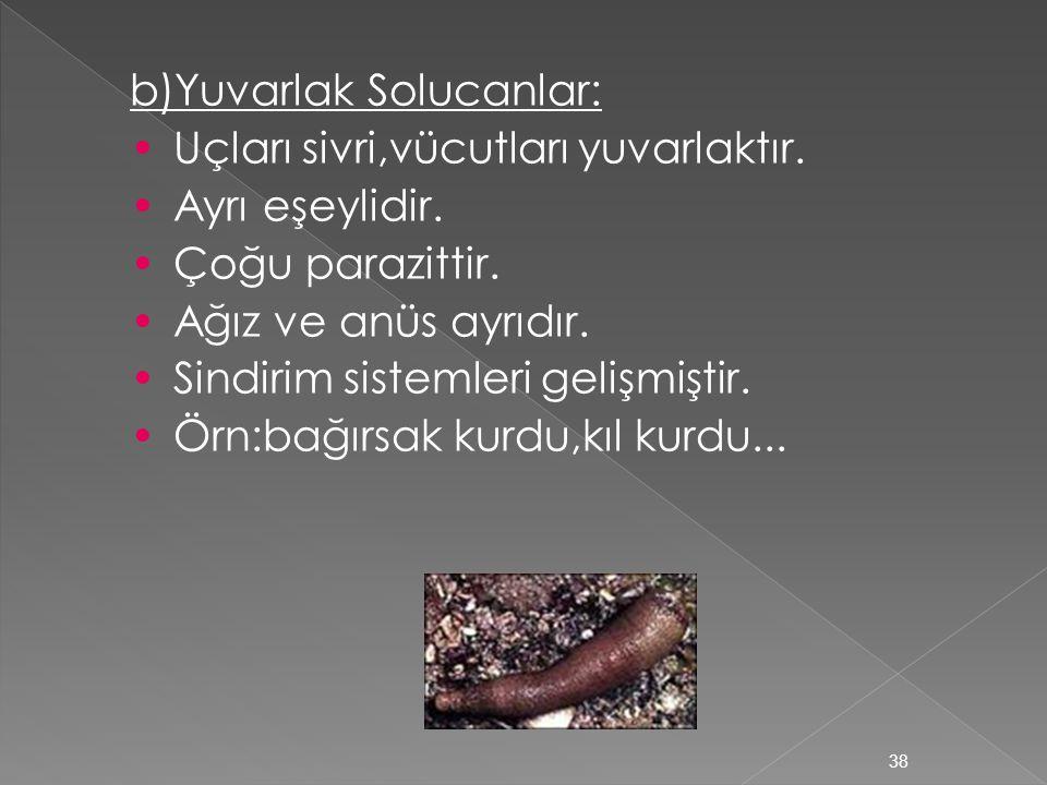 a)Yassı Solucanlar: Çoğu parazit ve erseliktir.Vücutlarında 3 hücre tabakası vardır.