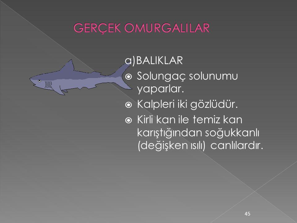 1.İLKEL KORDALILAR  Anfiyoksus ve tulumlu hayvan örnektir.