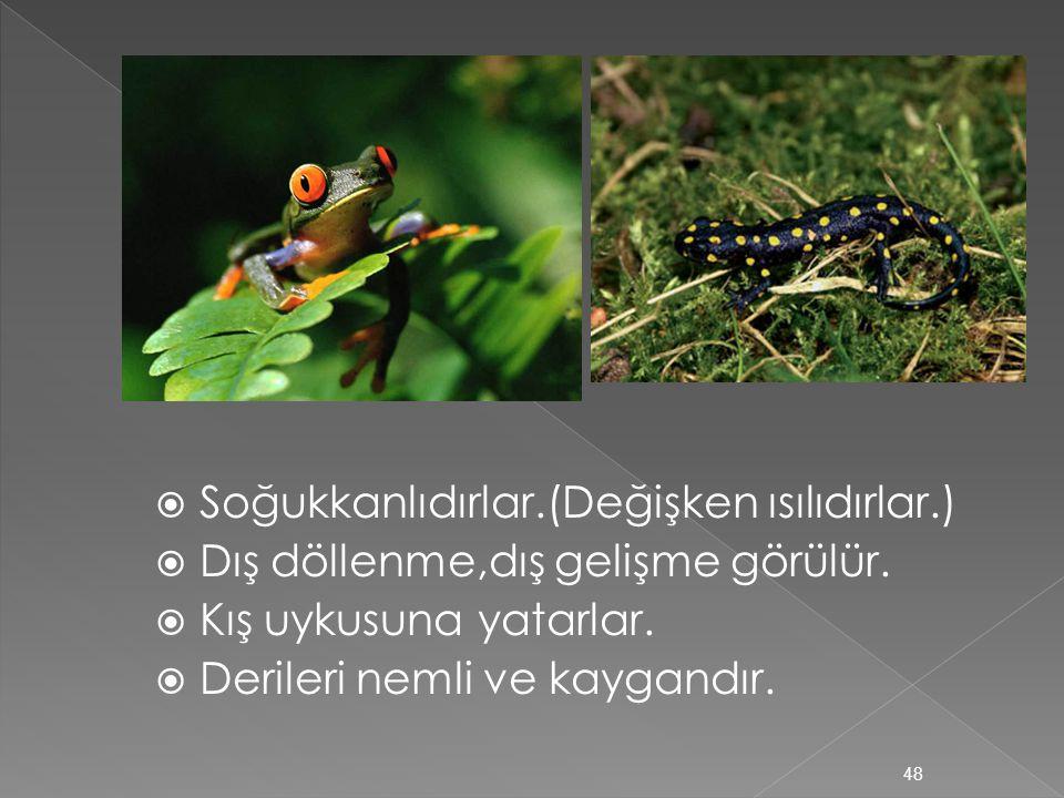 b)KURBAĞALAR ve SEMENDERLER  Karada ve suda yaşarlar.