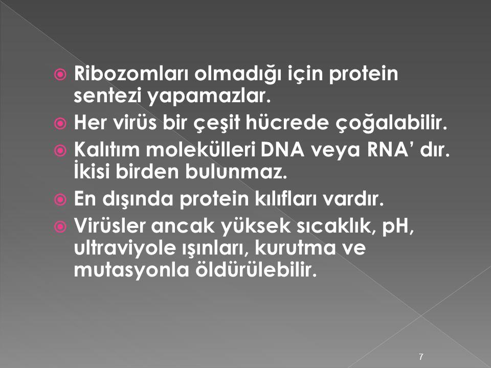 3.VİRÜSLER  Virüs,zehir demektir.Hastalık yaparlar.