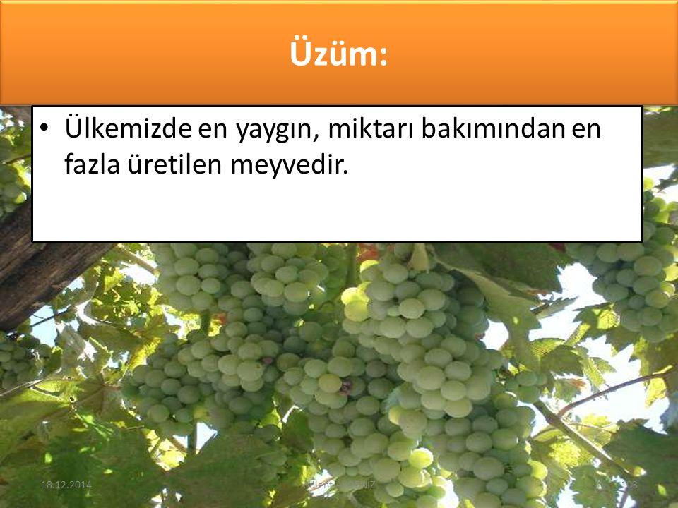 Üzüm: Ülkemizde en yaygın, miktarı bakımından en fazla üretilen meyvedir. 18.12.2014103Bülent AKDENİZ
