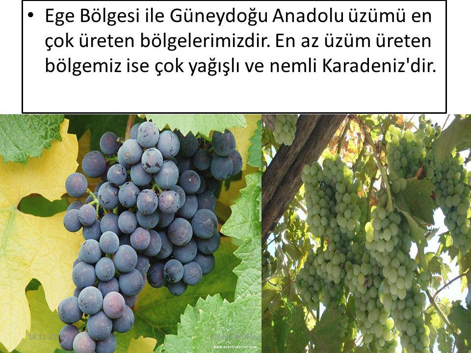 Ege Bölgesi ile Güneydoğu Anadolu üzümü en çok üreten bölgelerimizdir. En az üzüm üreten bölgemiz ise çok yağışlı ve nemli Karadeniz'dir. 18.12.201410