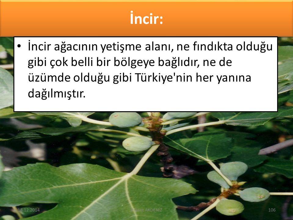 İncir: İncir ağacının yetişme alanı, ne fındıkta olduğu gibi çok belli bir bölgeye bağlıdır, ne de üzümde olduğu gibi Türkiye'nin her yanına dağılmışt