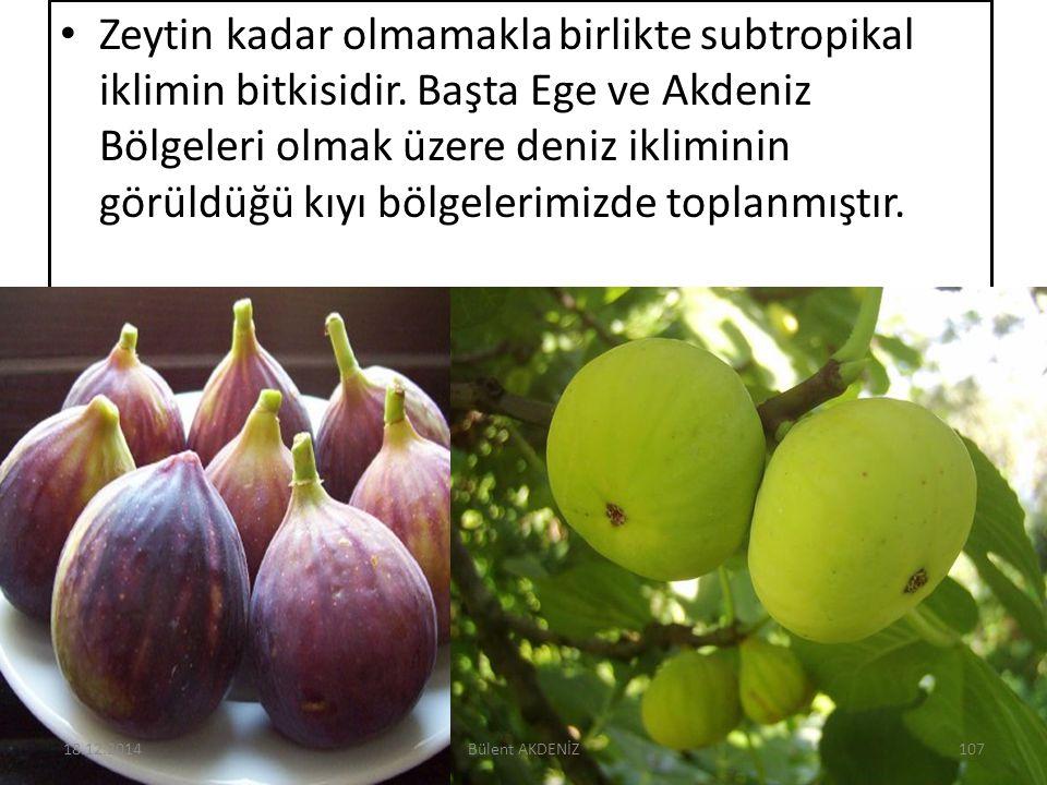 Zeytin kadar olmamakla birlikte subtropikal iklimin bitkisidir. Başta Ege ve Akdeniz Bölgeleri olmak üzere deniz ikliminin görüldüğü kıyı bölgelerimiz