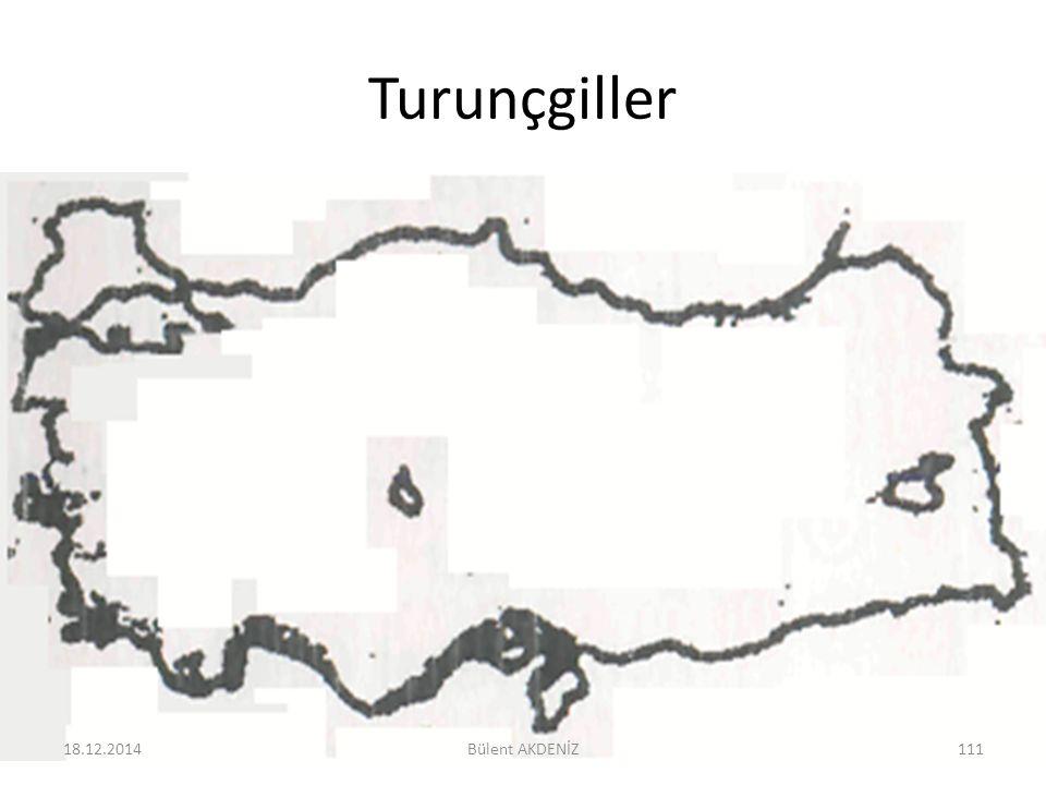 Turunçgiller 18.12.2014111Bülent AKDENİZ