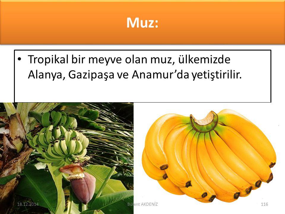 Muz: Tropikal bir meyve olan muz, ülkemizde Alanya, Gazipaşa ve Anamur'da yetiştirilir. 18.12.2014116Bülent AKDENİZ
