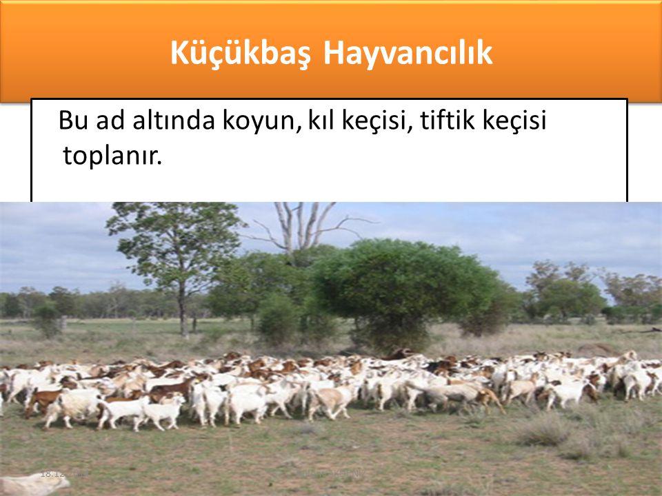 Küçükbaş Hayvancılık Bu ad altında koyun, kıl keçisi, tiftik keçisi toplanır. 18.12.2014126Bülent AKDENİZ