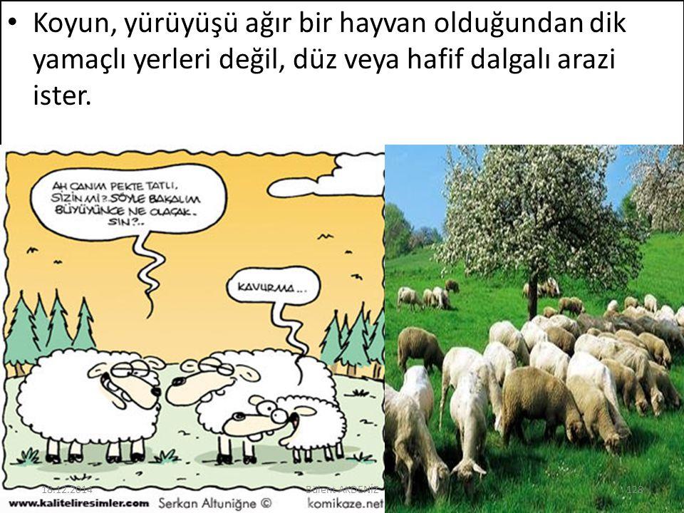 Koyun, yürüyüşü ağır bir hayvan olduğundan dik yamaçlı yerleri değil, düz veya hafif dalgalı arazi ister. 18.12.2014128Bülent AKDENİZ