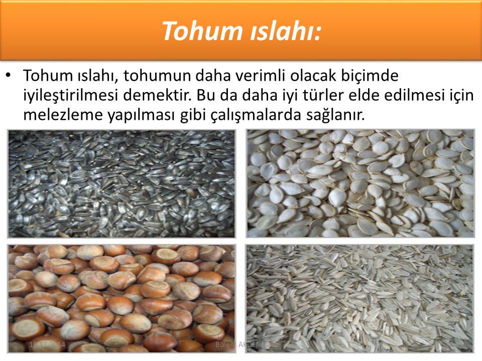 Tohum ıslahı: Tohum ıslahı, tohumun daha verimli olacak biçimde iyileştirilmesi demektir. Bu da daha iyi türler elde edilmesi için melezleme yapılması