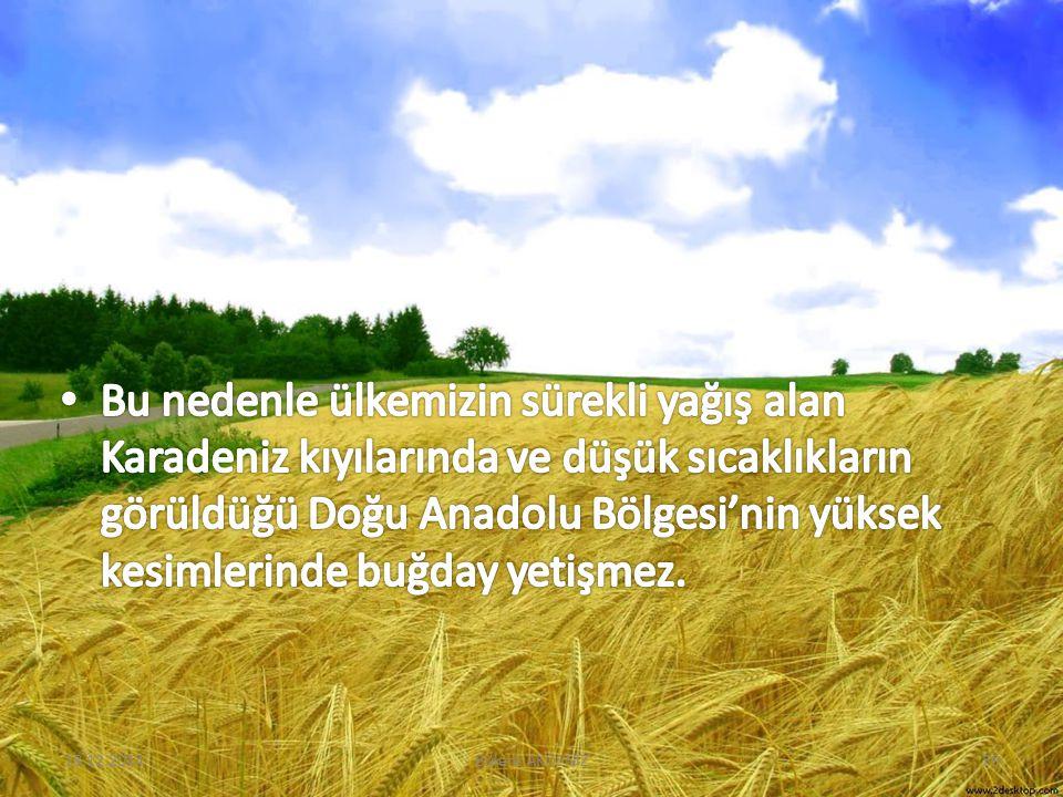 18.12.201439Bülent AKDENİZ