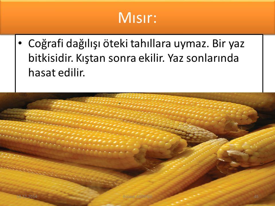 Mısır: Coğrafi dağılışı öteki tahıllara uymaz. Bir yaz bitkisidir. Kıştan sonra ekilir. Yaz sonlarında hasat edilir. 18.12.201445Bülent AKDENİZ