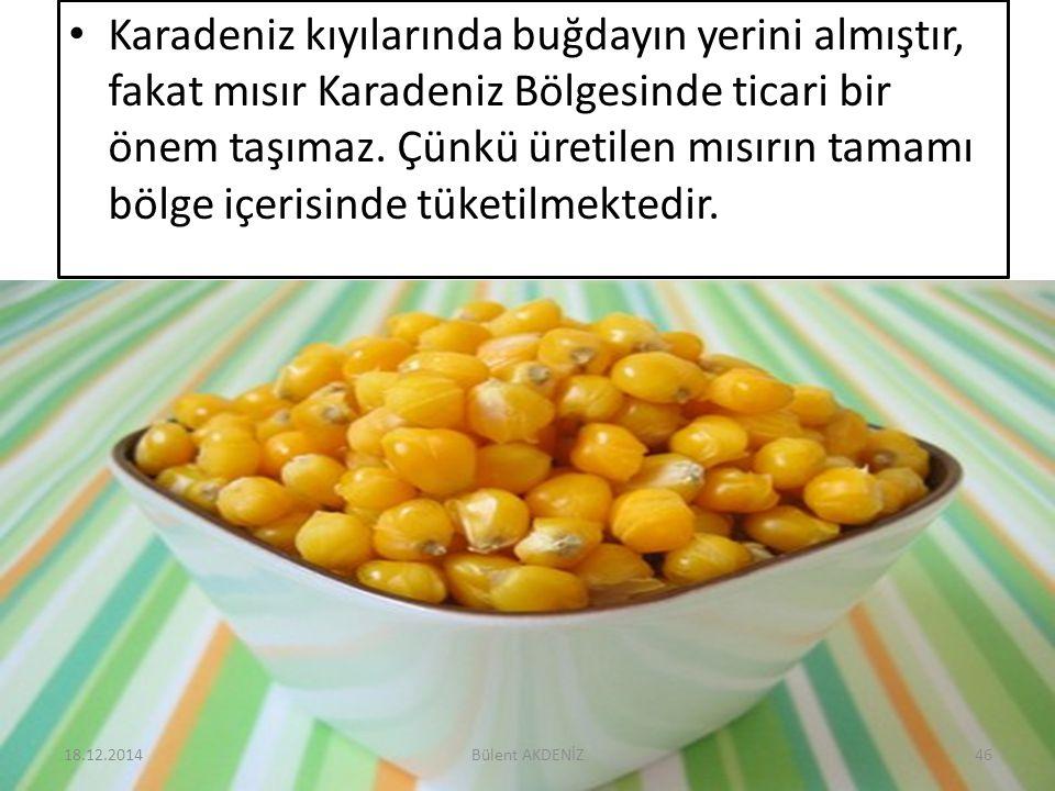 Karadeniz kıyılarında buğdayın yerini almıştır, fakat mısır Karadeniz Bölgesinde ticari bir önem taşımaz. Çünkü üretilen mısırın tamamı bölge içerisin