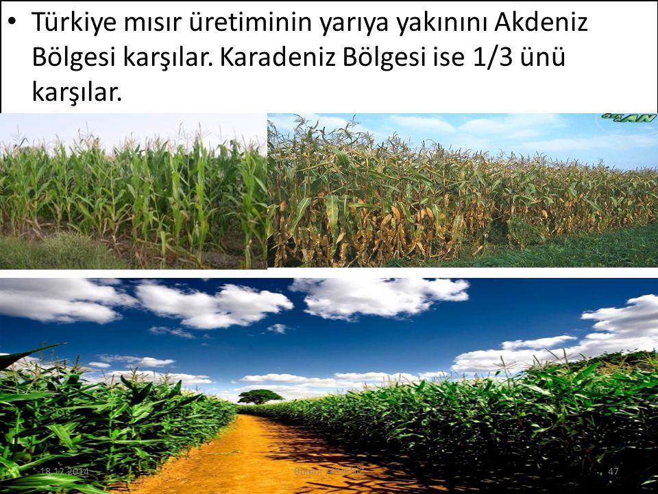 Türkiye mısır üretiminin yarıya yakınını Akdeniz Bölgesi karşılar. Karadeniz Bölgesi ise 1/3 ünü karşılar. 18.12.201447Bülent AKDENİZ
