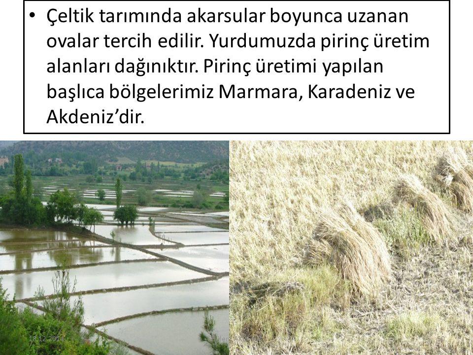 Çeltik tarımında akarsular boyunca uzanan ovalar tercih edilir. Yurdumuzda pirinç üretim alanları dağınıktır. Pirinç üretimi yapılan başlıca bölgeleri