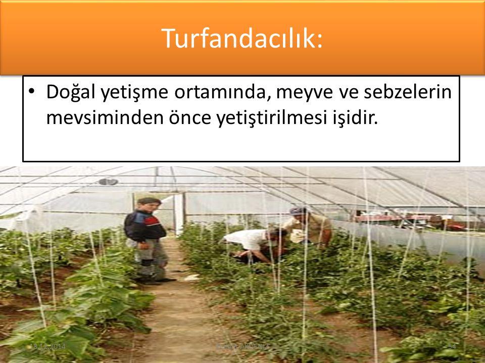 Turfandacılık: Doğal yetişme ortamında, meyve ve sebzelerin mevsiminden önce yetiştirilmesi işidir. 18.12.201454Bülent AKDENİZ