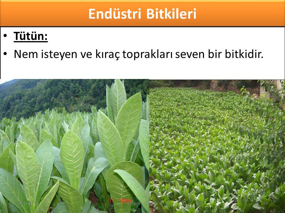 Endüstri Bitkileri Tütün: Nem isteyen ve kıraç toprakları seven bir bitkidir. 18.12.201459Bülent AKDENİZ