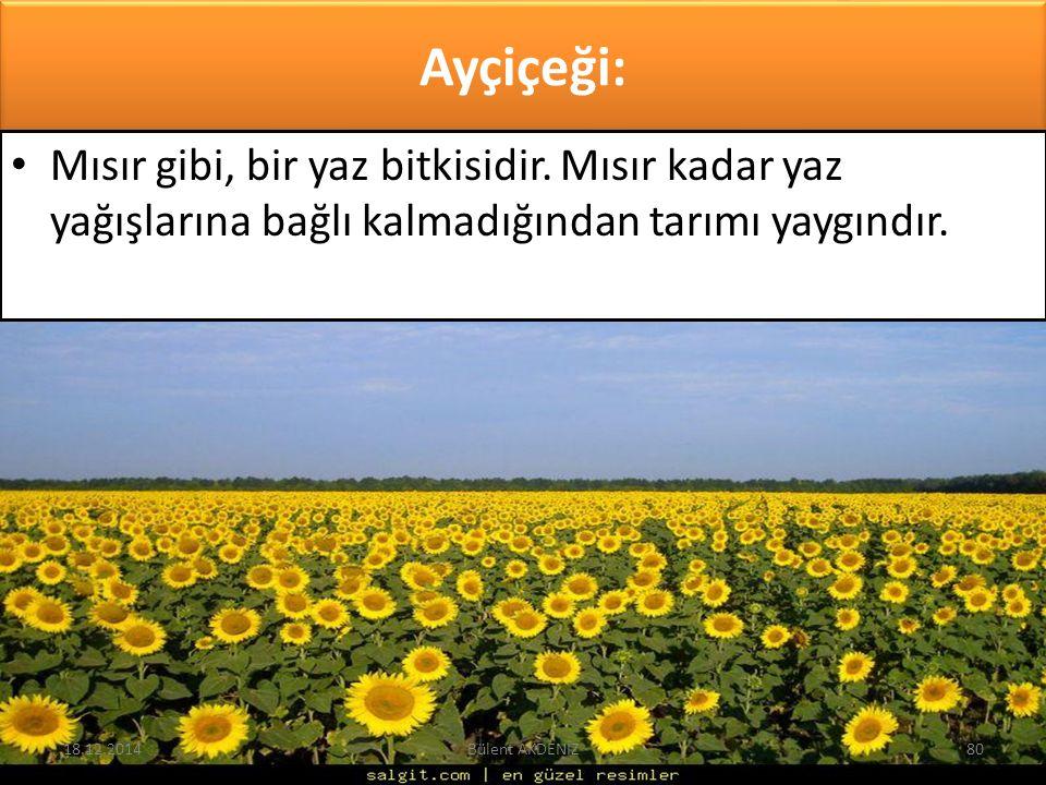 Ayçiçeği: Mısır gibi, bir yaz bitkisidir. Mısır kadar yaz yağışlarına bağlı kalmadığından tarımı yaygındır. 18.12.201480Bülent AKDENİZ