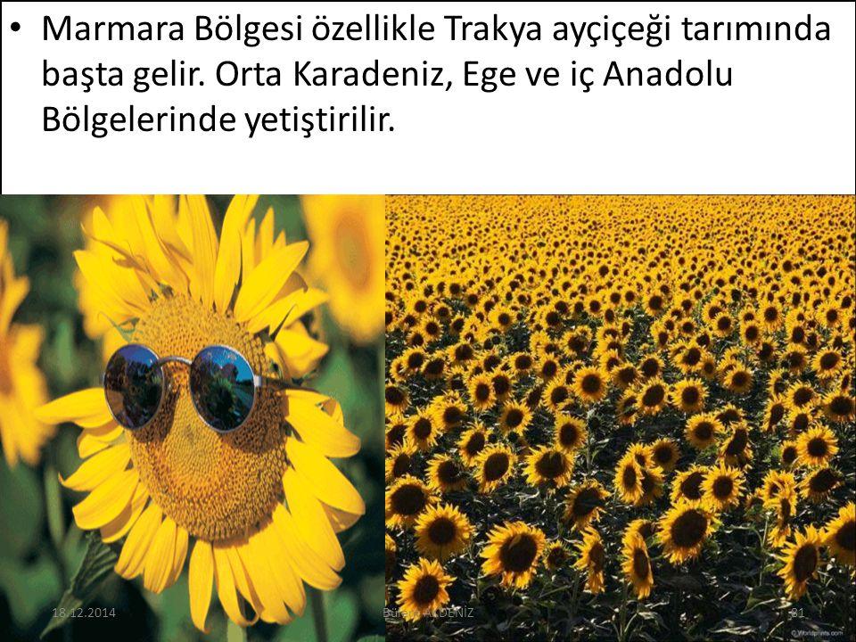 Marmara Bölgesi özellikle Trakya ayçiçeği tarımında başta gelir. Orta Karadeniz, Ege ve iç Anadolu Bölgelerinde yetiştirilir. 18.12.201481Bülent AKDEN