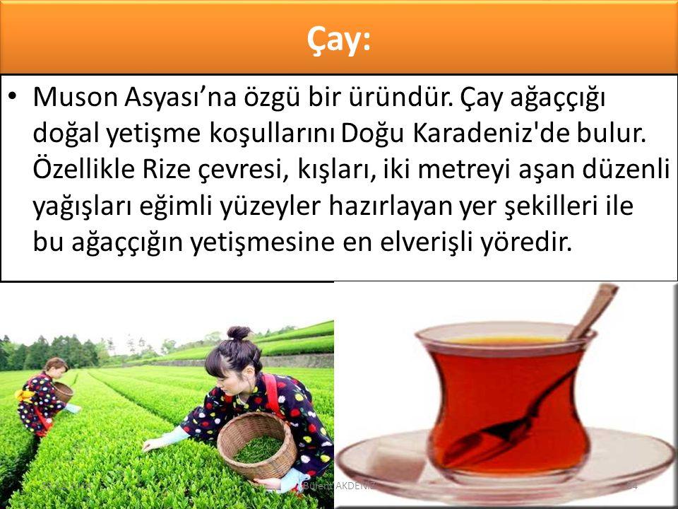 Çay: Muson Asyası'na özgü bir üründür. Çay ağaççığı doğal yetişme koşullarını Doğu Karadeniz'de bulur. Özellikle Rize çevresi, kışları, iki metreyi aş