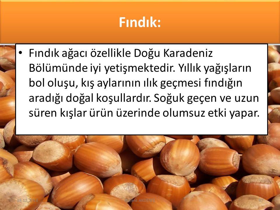 Fındık: Fındık ağacı özellikle Doğu Karadeniz Bölümünde iyi yetişmektedir. Yıllık yağışların bol oluşu, kış aylarının ılık geçmesi fındığın aradığı do