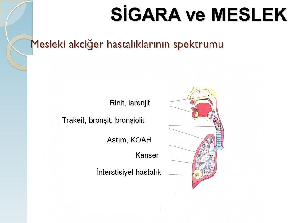 Mesleki akci ğ er hastalıklarının spektrumu İnterstisiyel hastalık Kanser Rinit, larenjit Trakeit, bronşit, bronşiolit Astım, KOAH SİGARA ve MESLEK