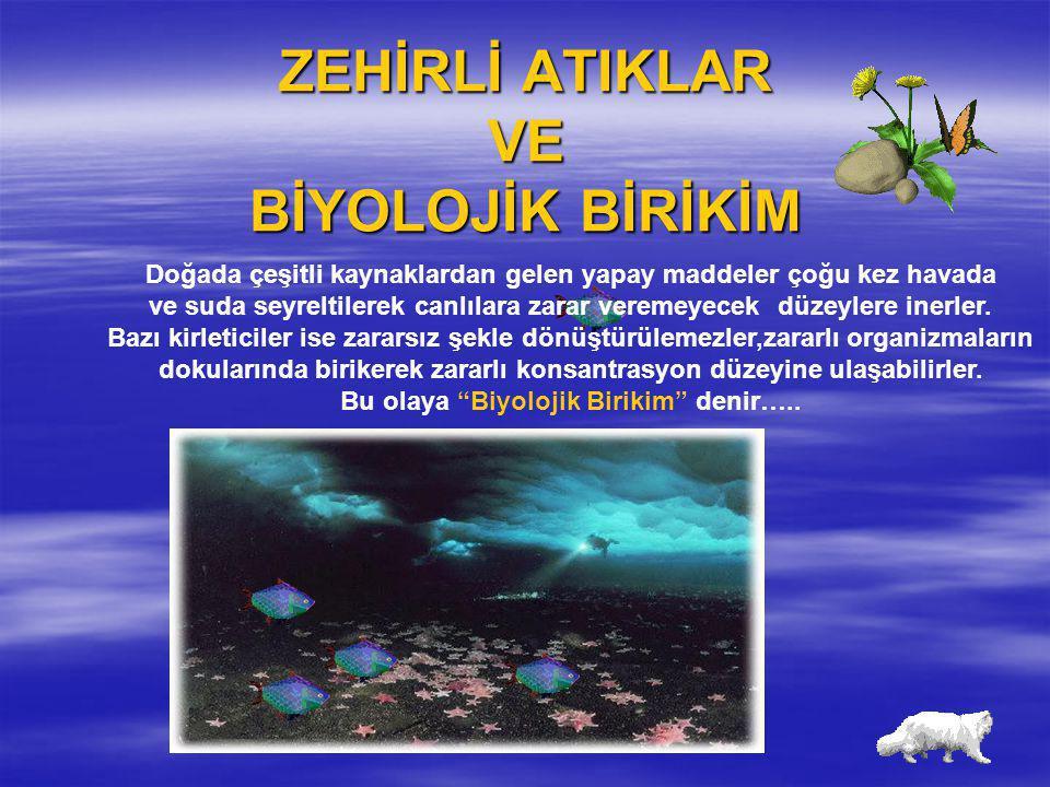ZEHİRLİ ATIKLAR VE BİYOLOJİK BİRİKİM Doğada çeşitli kaynaklardan gelen yapay maddeler çoğu kez havada ve suda seyreltilerek canlılara zarar veremeyece