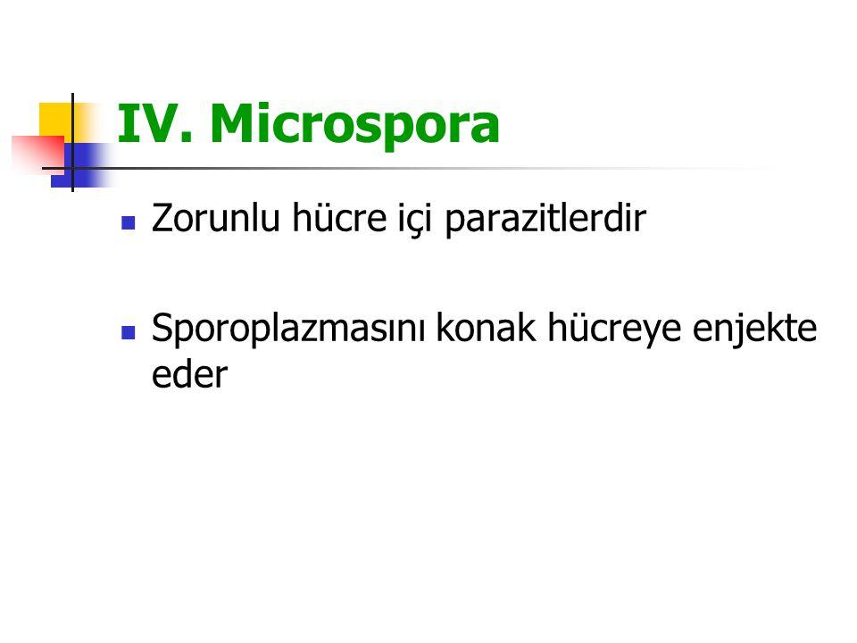 IV. Microspora Zorunlu hücre içi parazitlerdir Sporoplazmasını konak hücreye enjekte eder