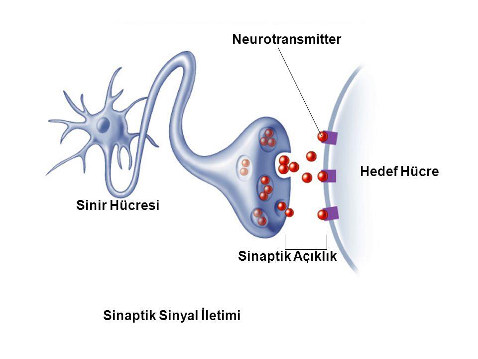 Fig. 7.2d (TEArt) Sinaptik Sinyal İletimi Sinir Hücresi Neurotransmitter Sinaptik Açıklık Hedef Hücre
