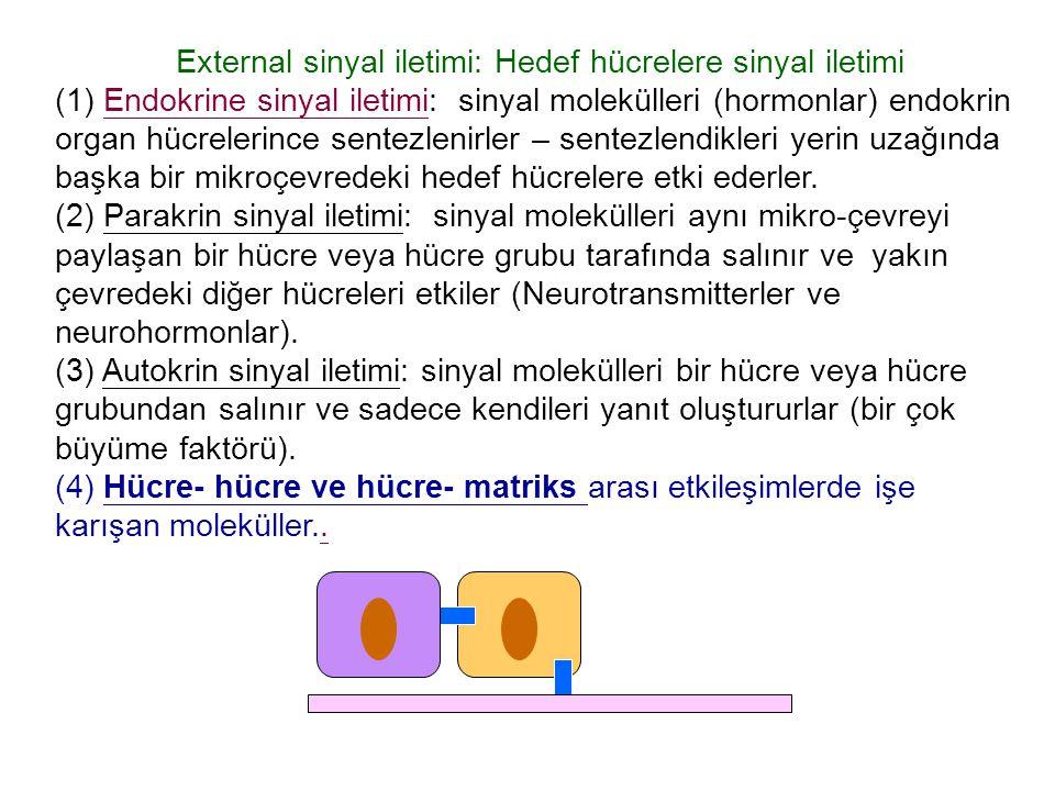External sinyal iletimi: Hedef hücrelere sinyal iletimi (1) Endokrine sinyal iletimi: sinyal molekülleri (hormonlar) endokrin organ hücrelerince sentezlenirler – sentezlendikleri yerin uzağında başka bir mikroçevredeki hedef hücrelere etki ederler.