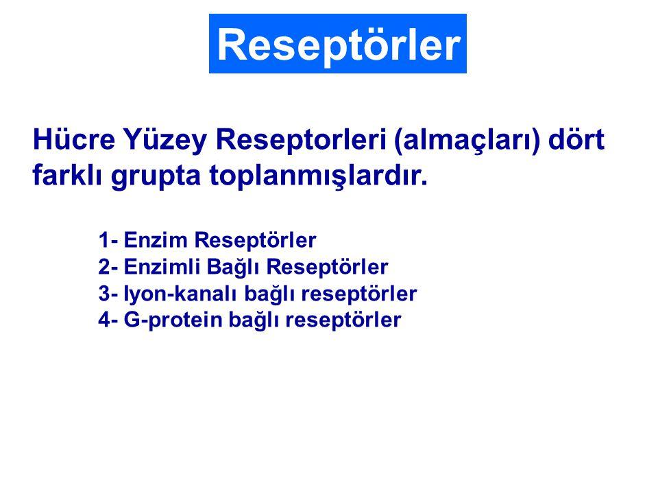 Hücre Yüzey Reseptorleri (almaçları) dört farklı grupta toplanmışlardır.