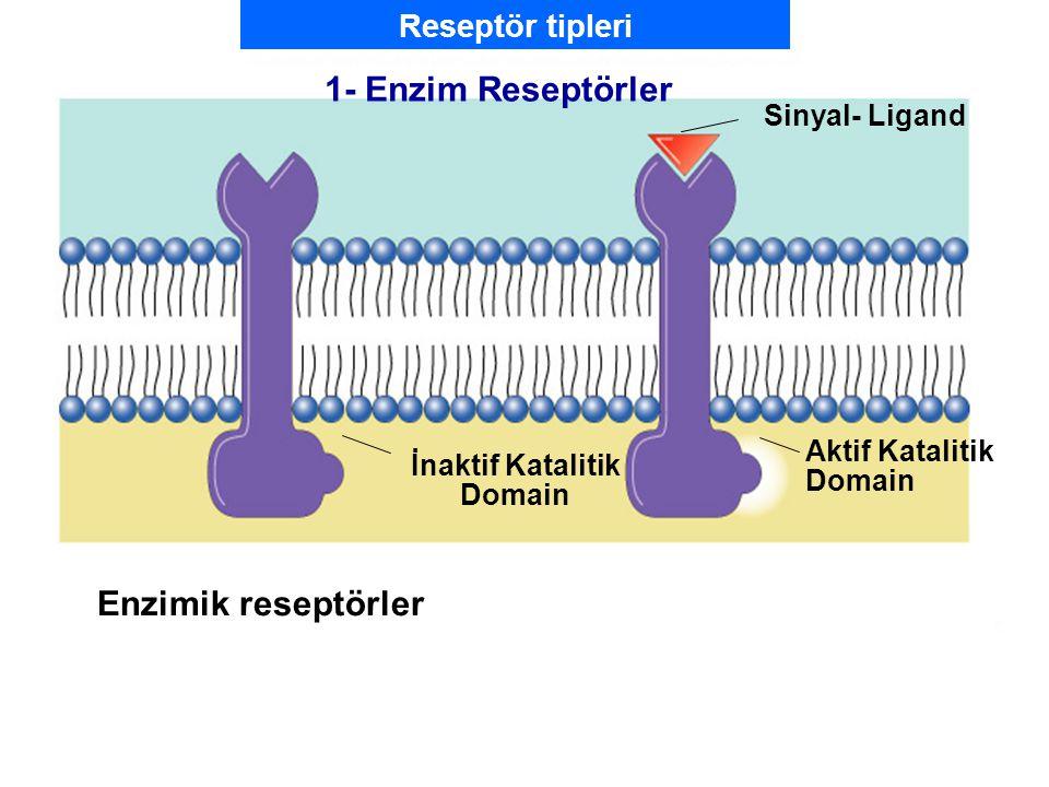 Fig. 7.5b (TEArt) Enzimik reseptörler Sinyal- Ligand İnaktif Katalitik Domain Aktif Katalitik Domain 1- Enzim Reseptörler Reseptör tipleri