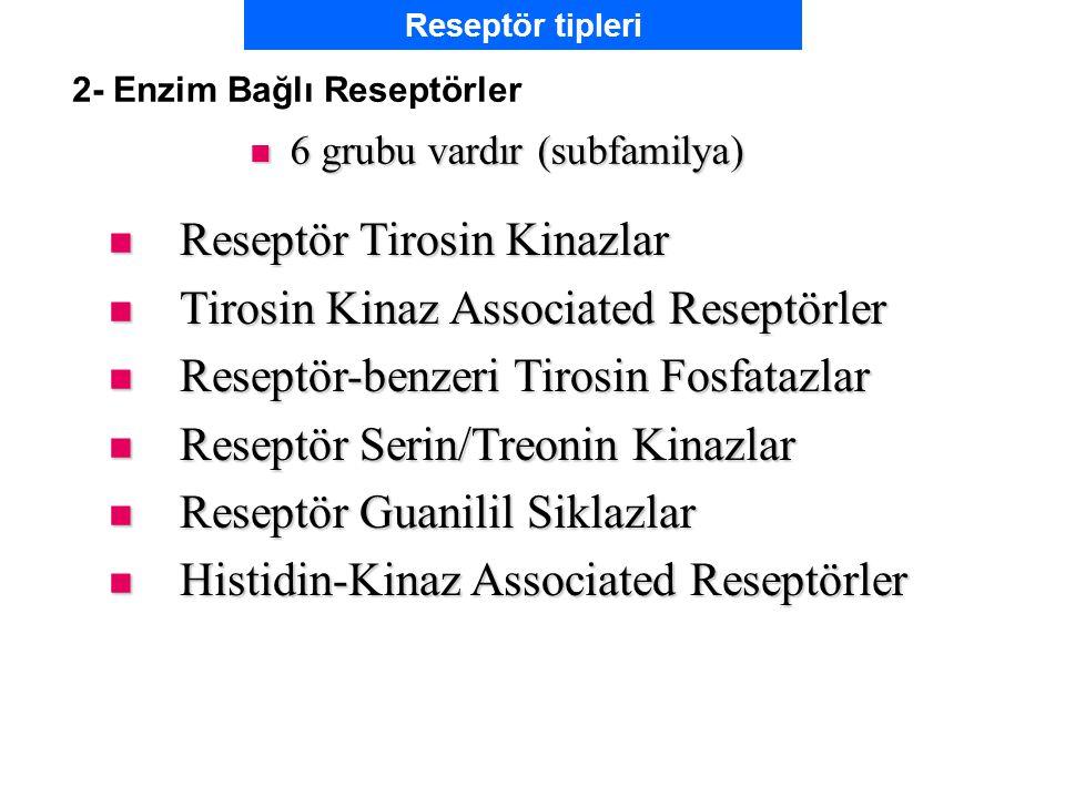 2- Enzim Bağlı Reseptörler 6 grubu vardır (subfamilya) 6 grubu vardır (subfamilya) Reseptör Tirosin Kinazlar Reseptör Tirosin Kinazlar Tirosin Kinaz Associated Reseptörler Tirosin Kinaz Associated Reseptörler Reseptör-benzeri Tirosin Fosfatazlar Reseptör-benzeri Tirosin Fosfatazlar Reseptör Serin/Treonin Kinazlar Reseptör Serin/Treonin Kinazlar Reseptör Guanilil Siklazlar Reseptör Guanilil Siklazlar Histidin-Kinaz Associated Reseptörler Histidin-Kinaz Associated Reseptörler Reseptör tipleri