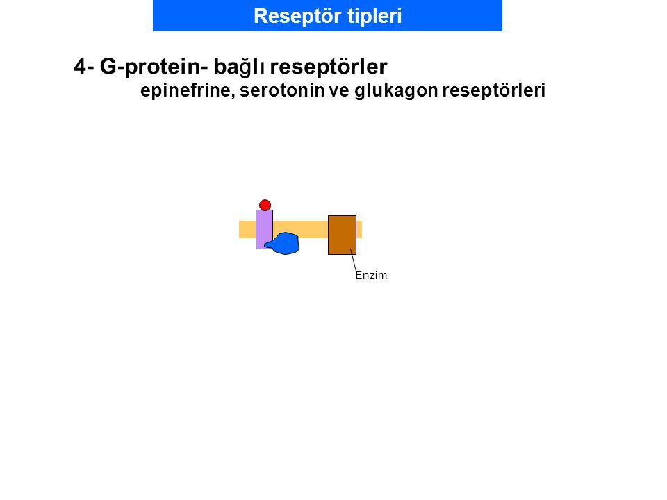 Reseptör tipleri 4- G-protein- bağlı reseptörler epinefrine, serotonin ve glukagon reseptörleri