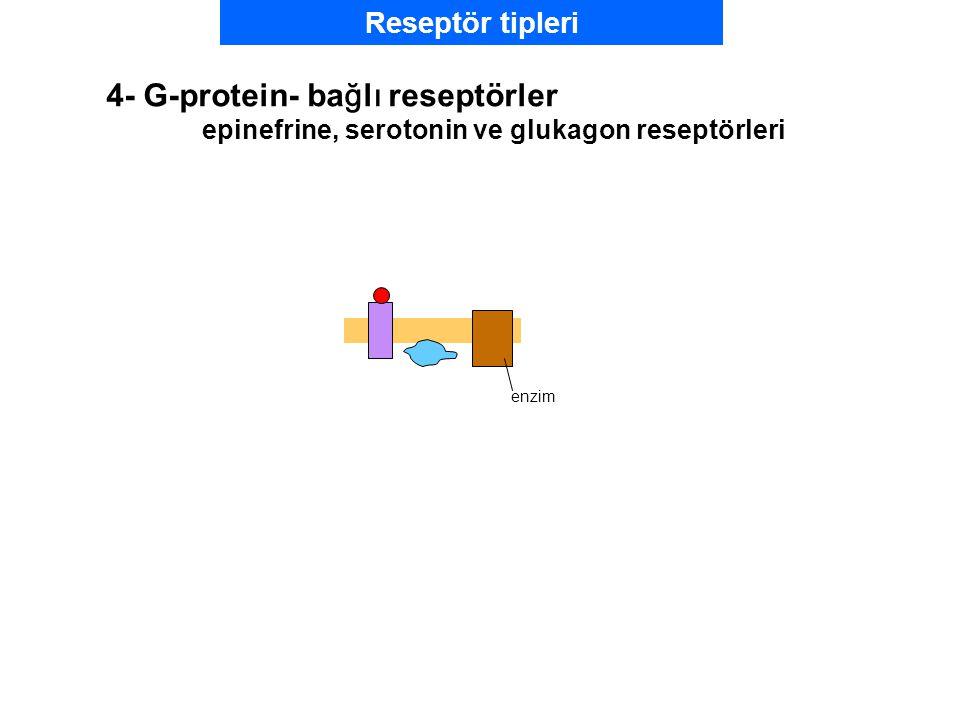 enzim Reseptör tipleri 4- G-protein- bağlı reseptörler epinefrine, serotonin ve glukagon reseptörleri