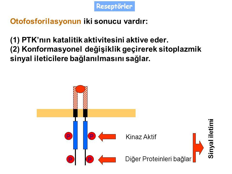 P P P P Kinaz Aktif Diğer Proteinleri bağlar Otofosforilasyonun iki sonucu vardır: (1) PTK'nın katalitik aktivitesini aktive eder.