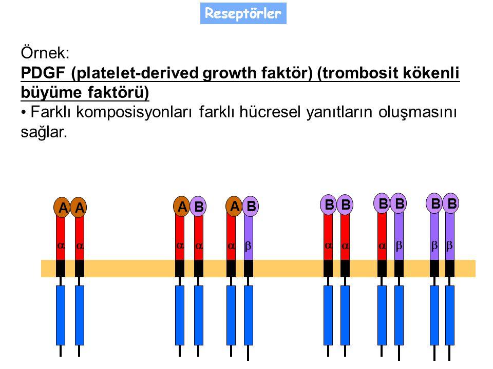 Örnek: PDGF (platelet-derived growth faktör) (trombosit kökenli büyüme faktörü) Farklı komposisyonları farklı hücresel yanıtların oluşmasını sağlar.