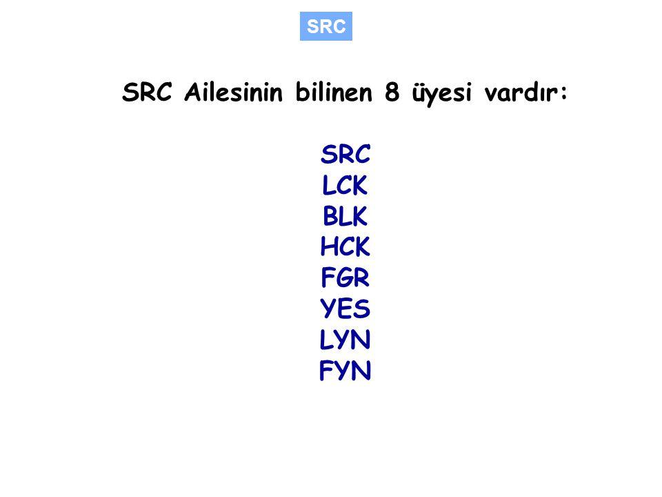 SRC Ailesinin bilinen 8 üyesi vardır: SRC LCK BLK HCK FGR YES LYN FYN SRC