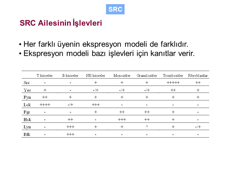 SRC Ailesinin İşlevleri Her farklı üyenin ekspresyon modeli de farklıdır.