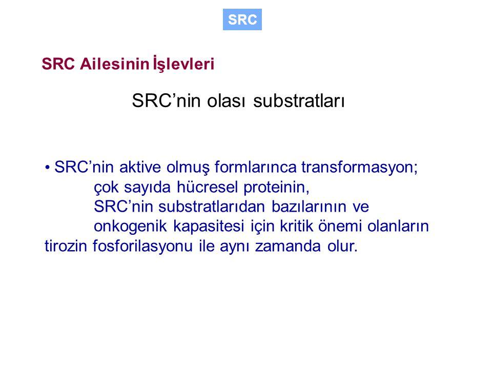 SRC'nin olası substratları SRC'nin aktive olmuş formlarınca transformasyon; çok sayıda hücresel proteinin, SRC'nin substratlarıdan bazılarının ve onkogenik kapasitesi için kritik önemi olanların tirozin fosforilasyonu ile aynı zamanda olur.