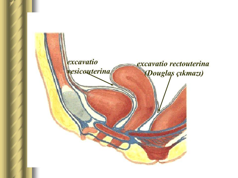 excavatio vesicouterina excavatio rectouterina (Douglas çıkmazı)