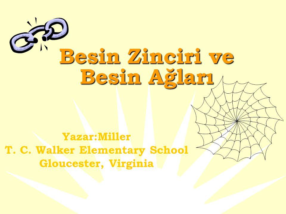 Besin Zinciri ve Besin Ağları Yazar:Miller T. C. Walker Elementary School Gloucester, Virginia
