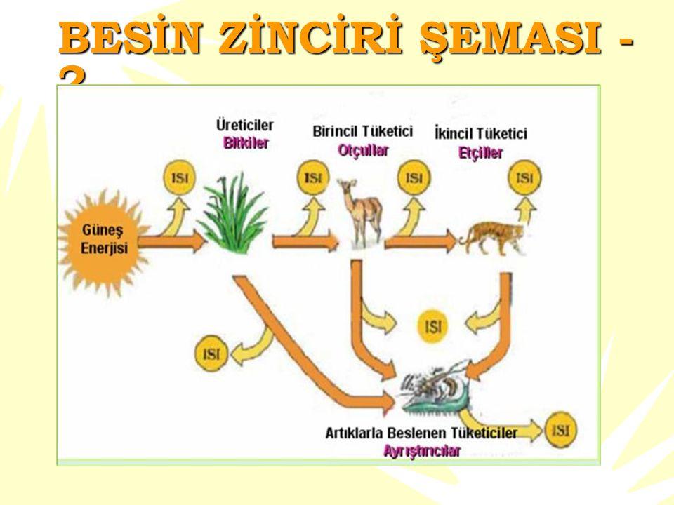 Besin zincirine bir göz atalım  Besin zinciri basitçe enerjiyi üreticilerden tüketicilere geçiren bir yol olarak tanımlanabilir.