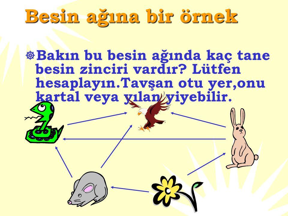 Besin ağı nedir?  Bir çevre ve ortamda daha gerçekçi bir yol vardır.O yol bitki ve hayvanlar arasındaki ilişkiyi gösteren yoldur.  Birçok besin zinc