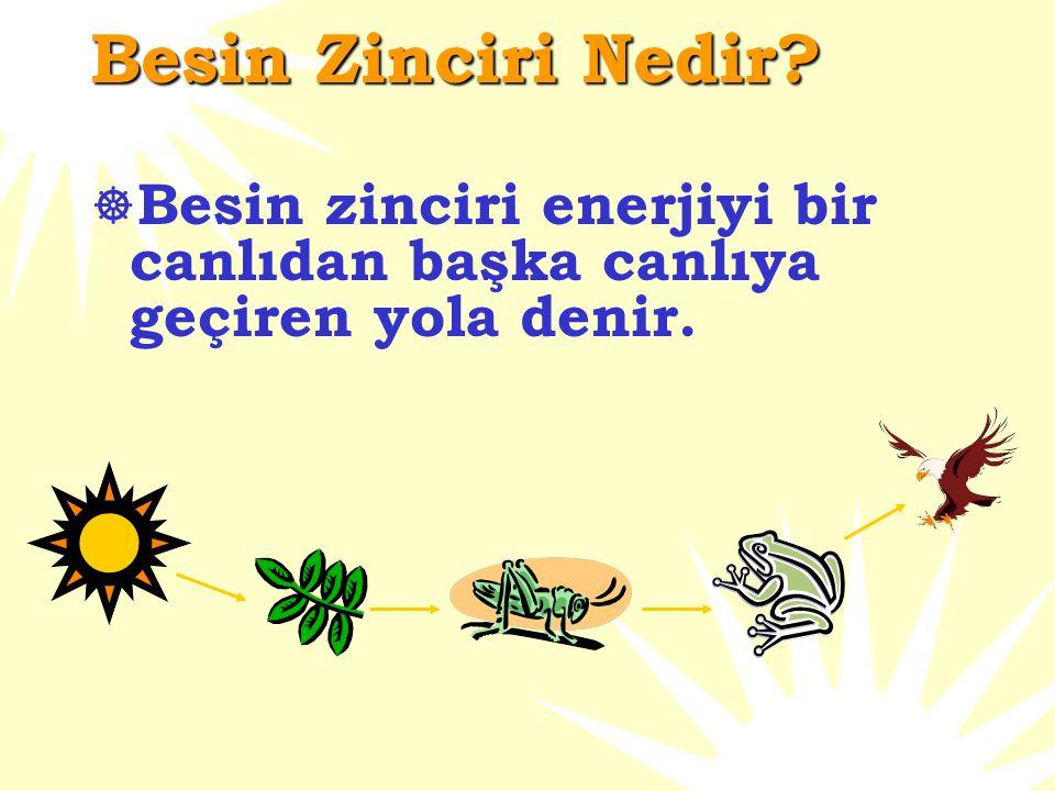 Besin Zinciri Nedir?  Besin zinciri enerjiyi bir canlıdan başka canlıya geçiren yola denir.