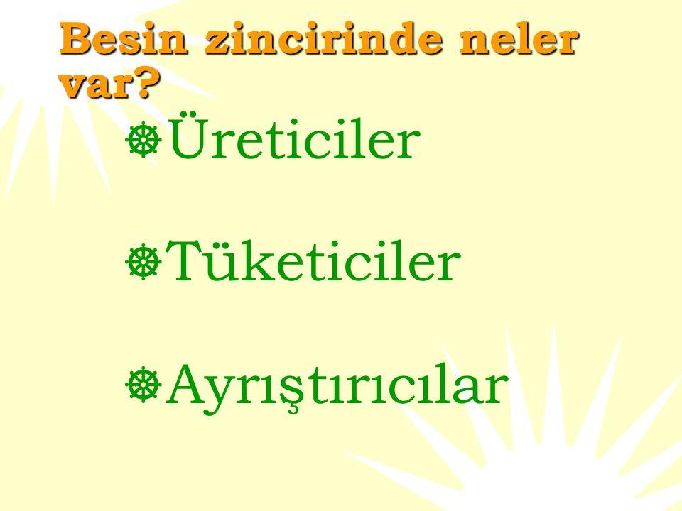 Besin zinciri tipleri  Akuatik-su besin zinciri (deniz bitkileri ve hayvanlarla ilgilidir)  Terrestriyal- Toprakla ilgili besin zinciri (toprak bitkileri ve hayvanlarla ilgilidir)