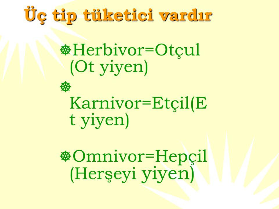 Üç tip tüketici vardır  Herbivor=Otçul (Ot yiyen)  Karnivor=Etçil(E t yiyen)  Omnivor=Hepçil (Herşeyi yiyen)