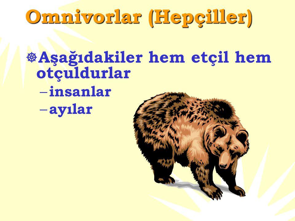 Omnivorlar (Hepçiller)  Aşağıdakiler hem etçil hem otçuldurlar – insanlar – ayılar