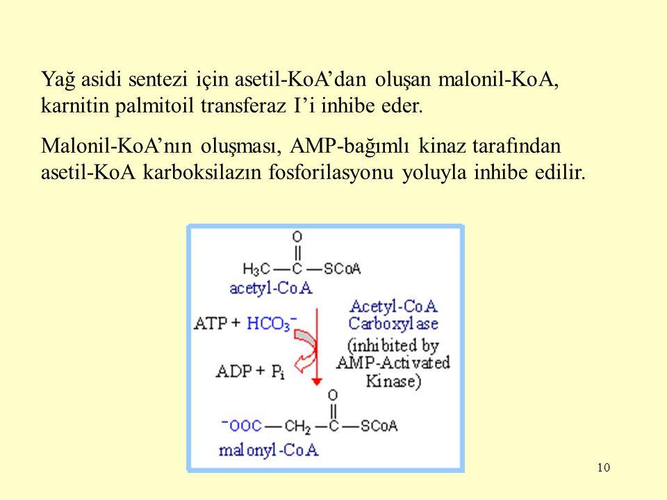 10 Yağ asidi sentezi için asetil-KoA'dan oluşan malonil-KoA, karnitin palmitoil transferaz I'i inhibe eder. Malonil-KoA'nın oluşması, AMP-bağımlı kina